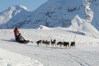 Chiens de traineaux sur le plateau de Rocherousse - © Gilles Baron